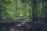forest-1509581_1920